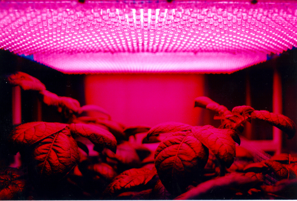 The Best LED Grow Light for Your Plants