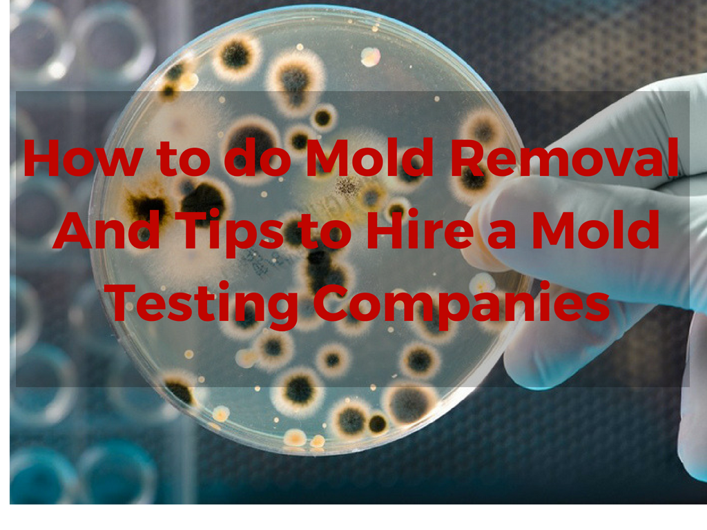 How to do Mold Removal in Los Angeles and Hiring an Expert.