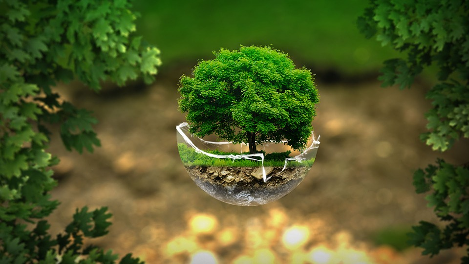 Tips For Making Your Business More Environmentally Friendly