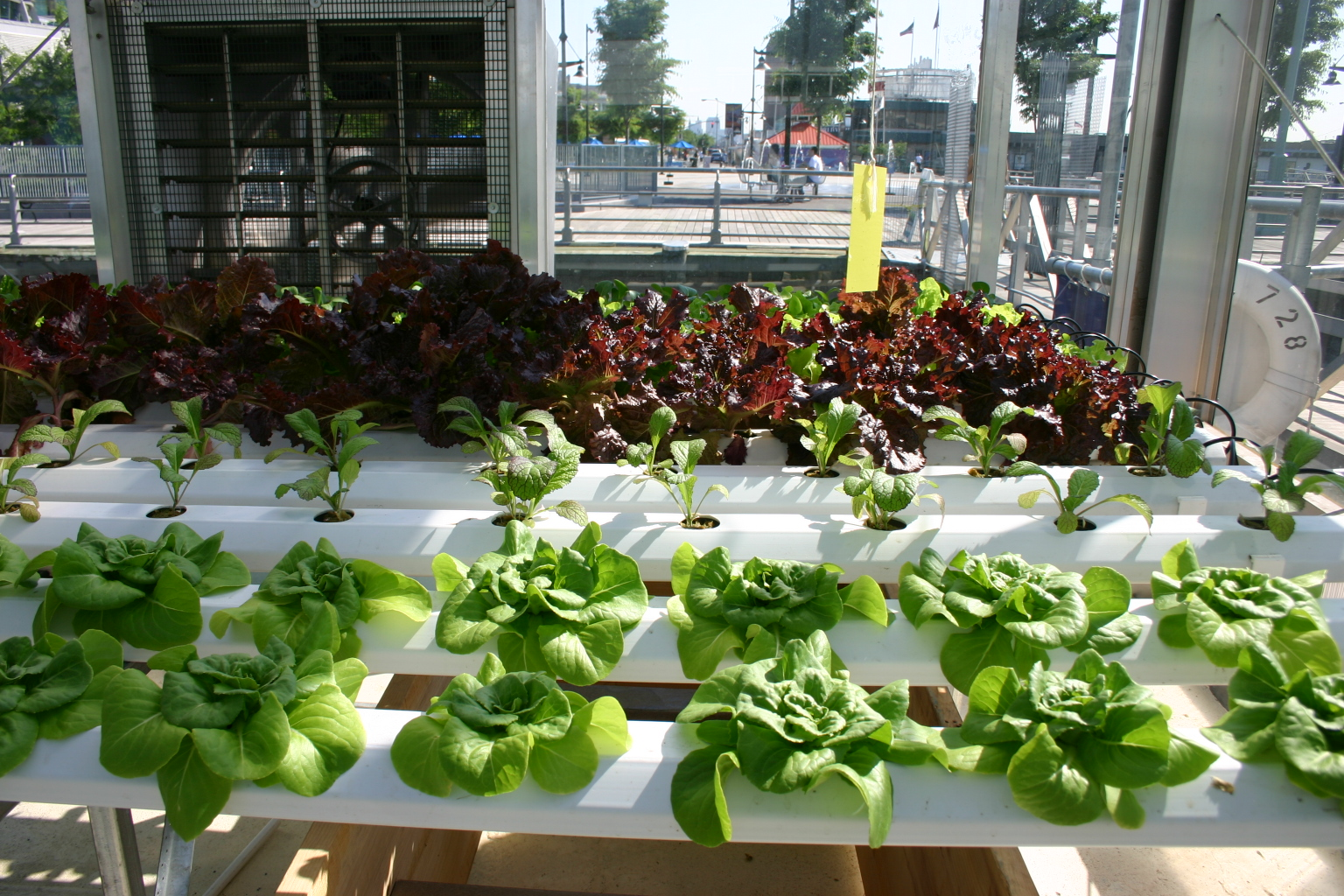 The Benefits of Hydroponics