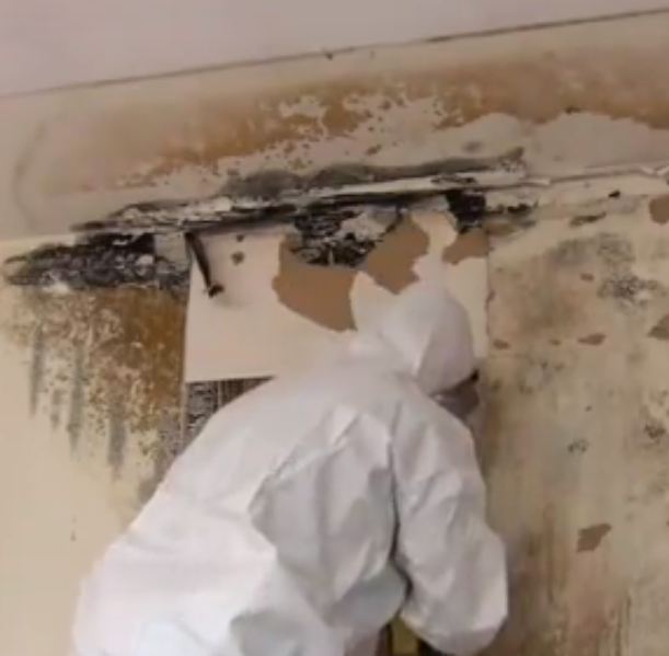 Mould in the house: why it is so dangerous and how to remove it
