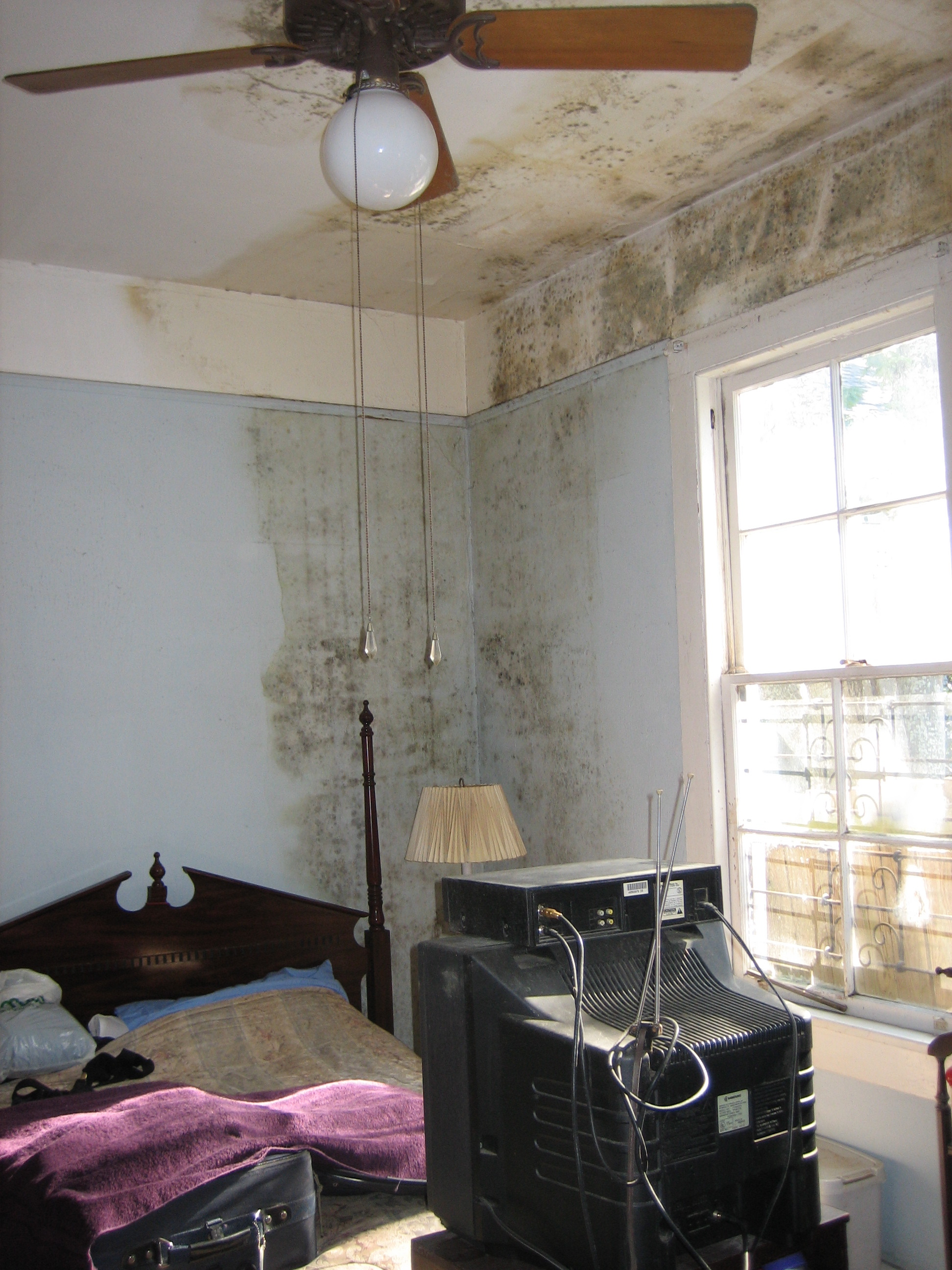 Symptoms Of Mold In The House: How To Detect It
