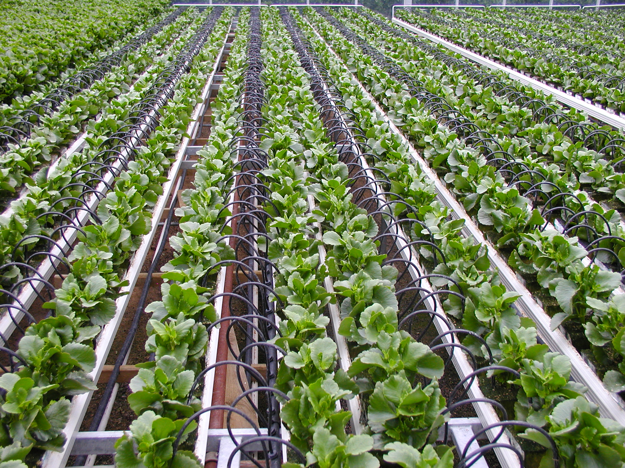 Why Farmers need to consider drip Irrigation system installation in Nigeria/Africa