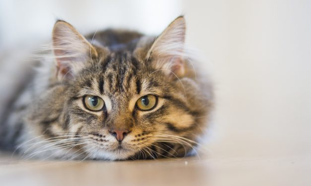 What To Look For In A Cat Litter Box
