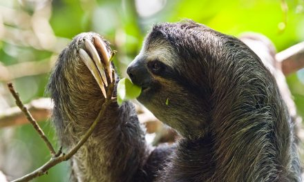 The Best Sloth Sanctuary in Costa Rica