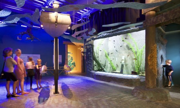 The History of Building Custom Aquariums