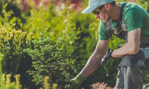 Everything about gardening