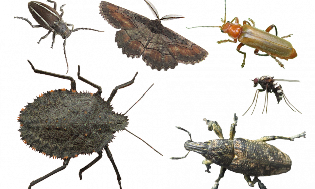 Top 5 Pest Control Tips for Healthy Living