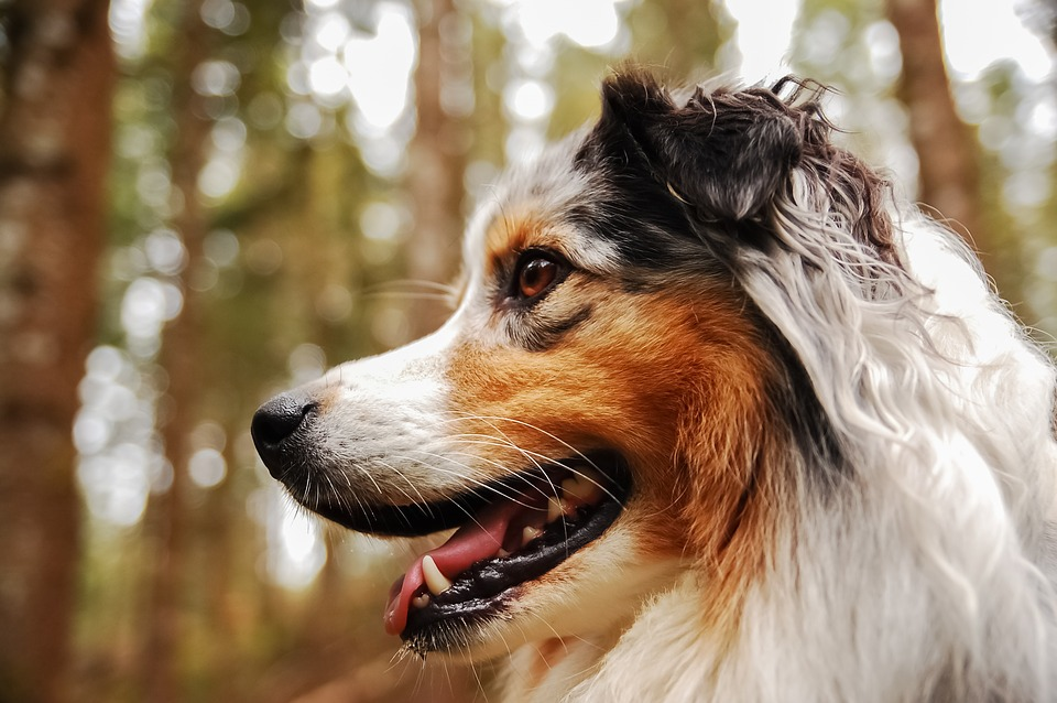 Your Guide to Choosing the Best Dog Hair Clippers