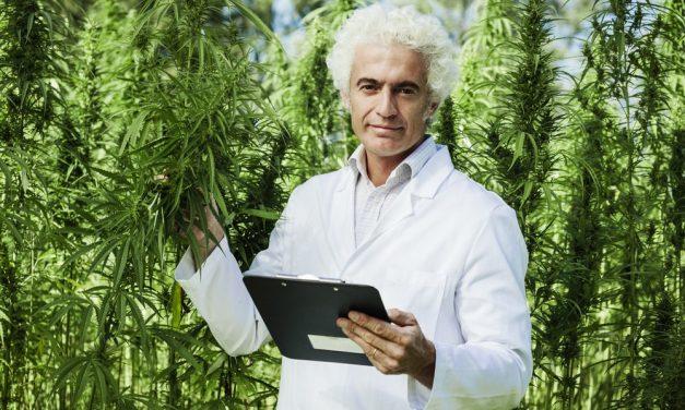 NY Medical Marijuana Law and Designated Caregivers