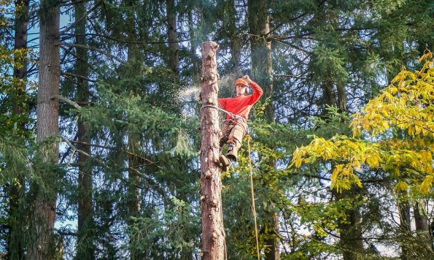 Seven Tips For Choosing The Right Tree Service