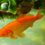 6 Most Popular Freshwater Fish for Your Tropical Aquarium
