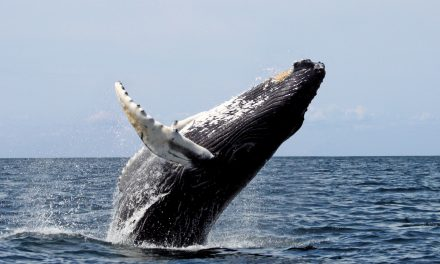 Top Places for Winter Whale Watching in the U.S.