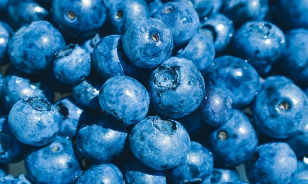 The Trend of Blueberry Farming In Japan