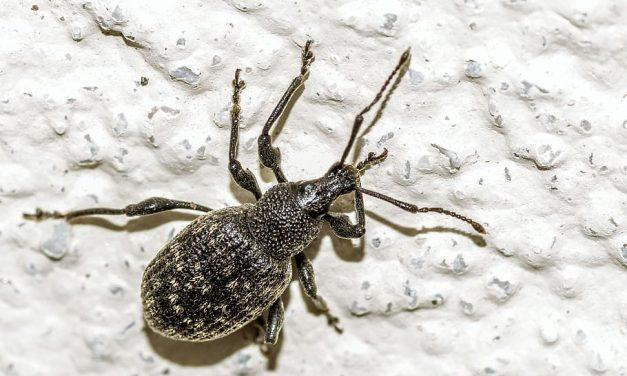 Pest control Advantages for Your Health