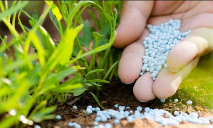 How Do You Apply Lawn Fertilizer?