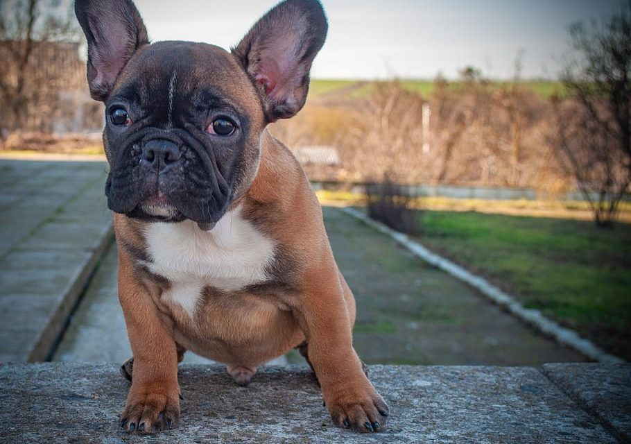 Tips to Properly Choose the Right Puppy