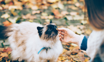 Tips of Feeding Your Senior Cat