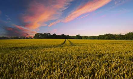 How You Can Make Your Small Farm Business Stand Out