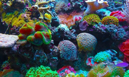 6 Ways to Protect Florida's Coral Reefs