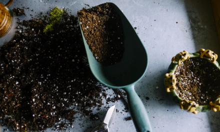 Winter is here – get your garden ready for the cold season