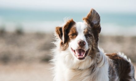 6 Tips to Keep Your Dog's Teeth Clean and Fresh