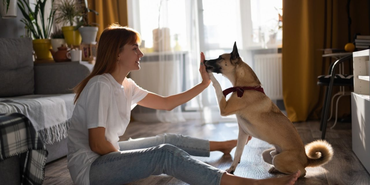 Six Things To Keep In Mind To Before Giving CBD For Pets