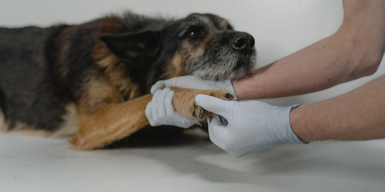 How to Improve the Outcome in Dogs with Orthopedic Problems