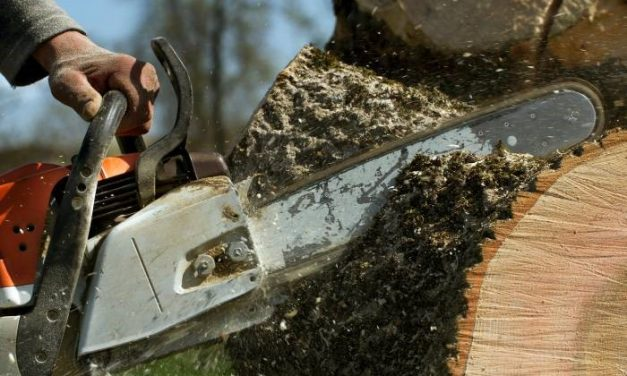 Is It Time to Schedule Tree Removal on Your Property? | A Homeowner's Guide